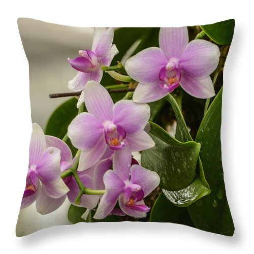 Orchids Throw Pillow featuring the photograph Floral Hangup by Robert Coffey