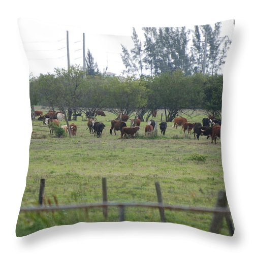 Trees Throw Pillow featuring the photograph Florida Ranch by Rob Hans