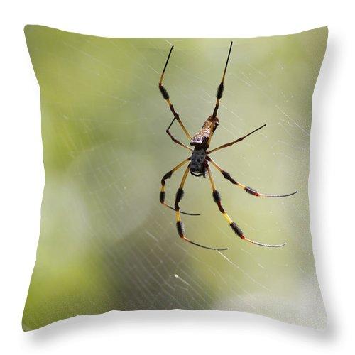 Spider Throw Pillow featuring the photograph Florida Spider by Deborah Benoit