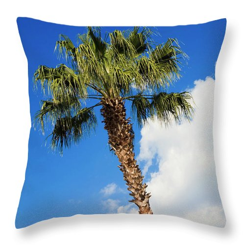 Florida State Tree Throw Pillow featuring the photograph Florida State Tree by Diane Macdonald