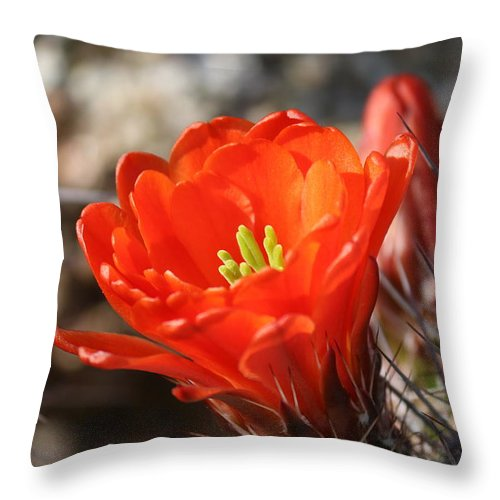 Cactus Throw Pillow featuring the photograph Flower by Lisa Spero