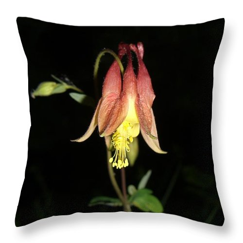 Flower Throw Pillow featuring the photograph Flower by Amanda Kabat