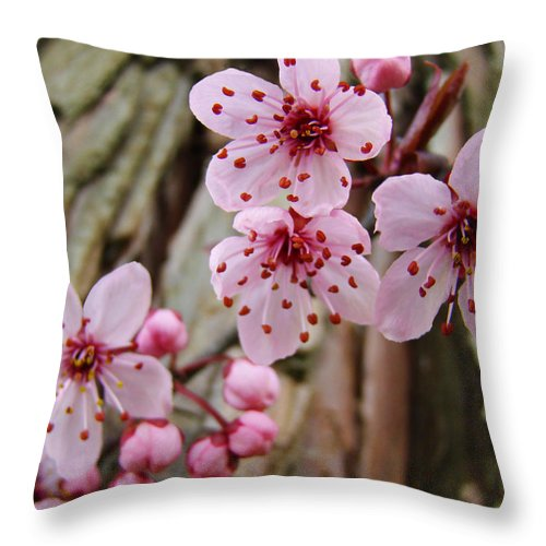 Tree Throw Pillow featuring the photograph Flower Blossoms Pink Tree Blossoms Art Print Giclee Spring Flowers by Baslee Troutman