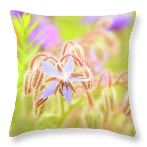 Gerlya Sunshine Throw Pillow featuring the photograph Flower Carpet by Gerlya Sunshine