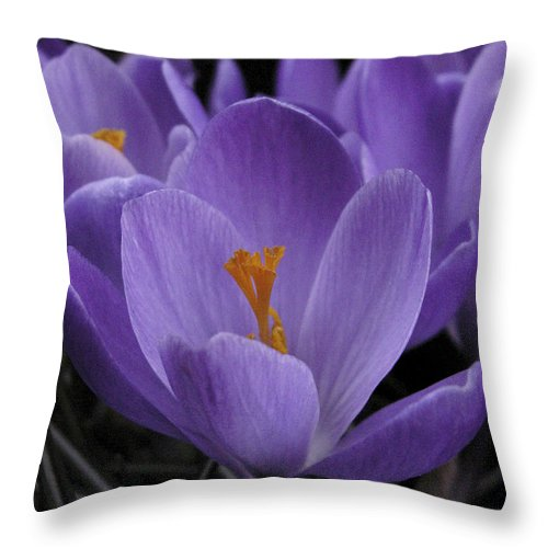 Flowers Throw Pillow featuring the photograph Flower Crocus by Nancy Griswold