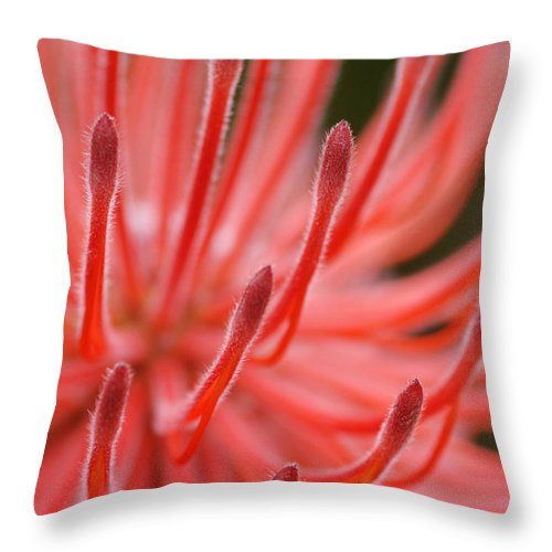 Macro Throw Pillow featuring the photograph Flower Fireworks by Catherine Lau