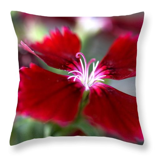Flower Throw Pillow featuring the photograph Flower by Jessica Wakefield