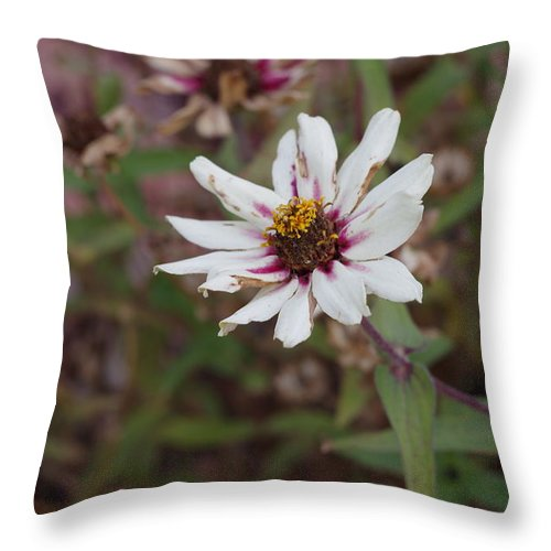 White Flower Throw Pillow featuring the photograph Flower by Julianne Minor