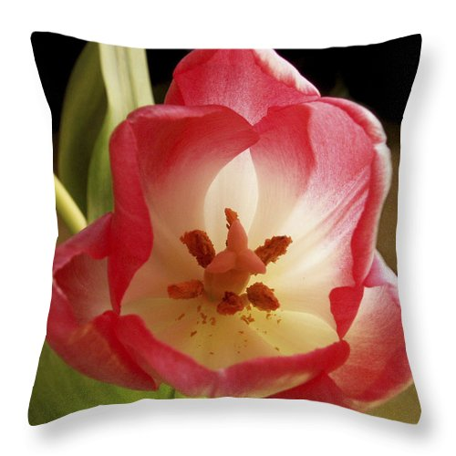 Flowers Throw Pillow featuring the photograph Flower Tulip by Nancy Griswold