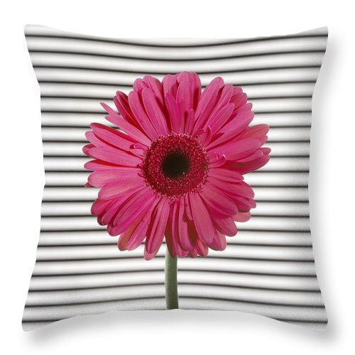 Gerber Daisy Throw Pillow featuring the photograph Flower With Lines by Jessica Wakefield