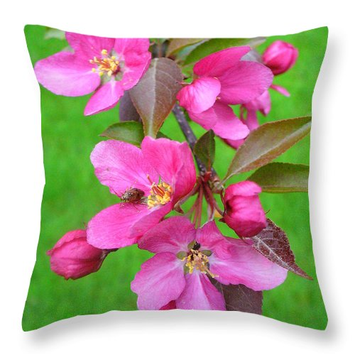 Flowering Trees Throw Pillow featuring the photograph Flowering Crab by Peggy King