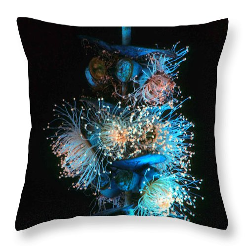 Flowering Eucalyptus Throw Pillow featuring the photograph Flowering Eucalyptus Natural Light by Laurie Paci