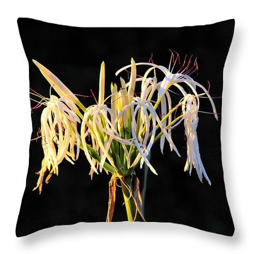 Flower Throw Pillow featuring the photograph Flowering In Florida by David Lee Thompson