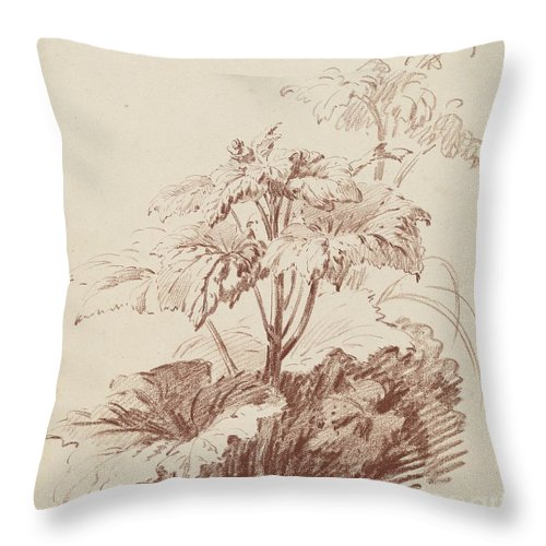 Throw Pillow featuring the drawing Flowering Plant With Buds by Jean-baptiste H?et, I