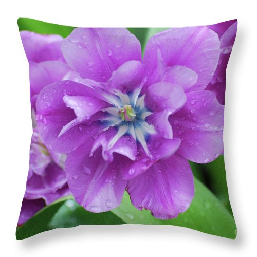 Tulip Throw Pillow featuring the photograph Flowering Purple Tulips With Raindrops From A Spring Rain by DejaVu Designs