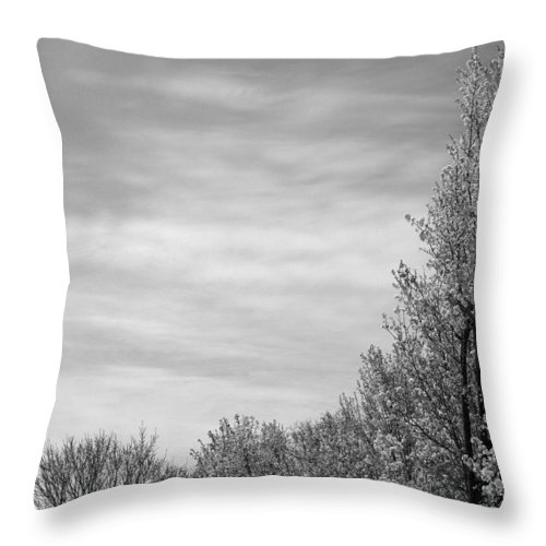 Trees Throw Pillow featuring the photograph Flowering Trees by Jessica Wakefield