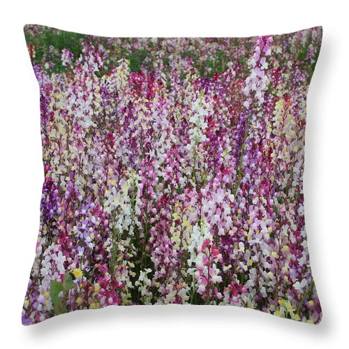Field Of Flowers Throw Pillow featuring the photograph Flowers Forever by Carol Groenen