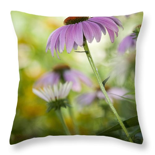 Echinacea Purpurea Throw Pillow featuring the photograph Flowers In Bloom by Chad Davis