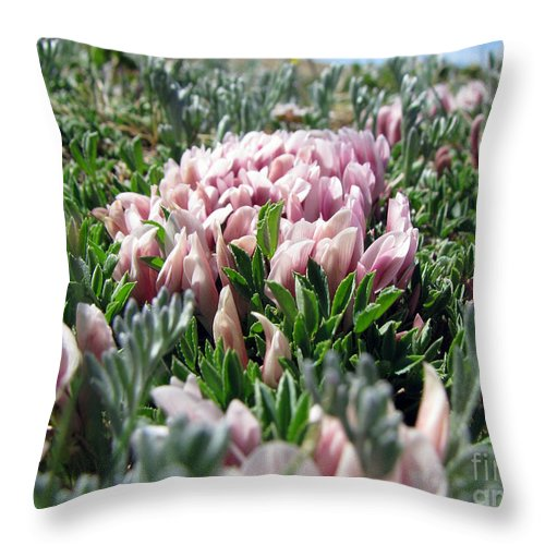 Flowers Throw Pillow featuring the photograph Flowers In The Alpine Tundra by Amanda Barcon