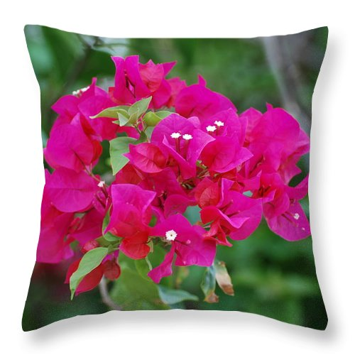 Flowers Throw Pillow featuring the photograph Flowers by Rob Hans