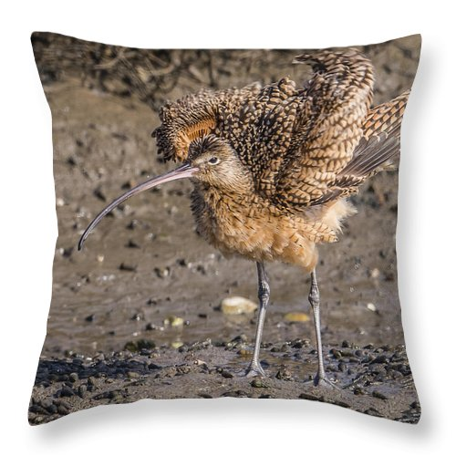 Fluffy Long-billed Curlew Throw Pillow featuring the photograph Fluffy Long-billed Curlew by Morris Finkelstein