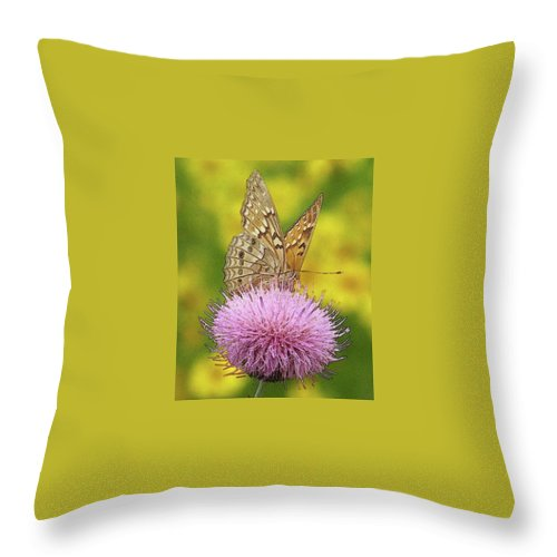 Throw Pillow featuring the photograph Flutterby by Amber Stubbs