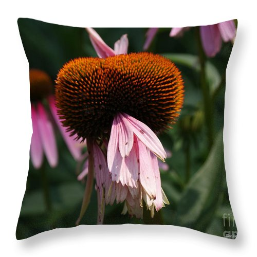 Floral Throw Pillow featuring the photograph Fly Eyes by Shelley Jones