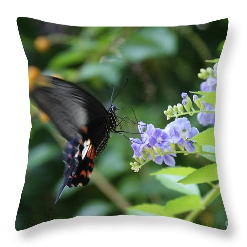 Butterfly Throw Pillow featuring the photograph Fly In Butterfly by Shelley Jones
