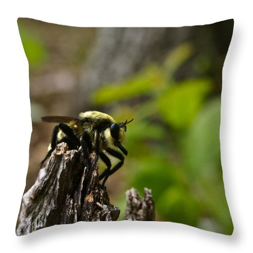 Fly Throw Pillow featuring the photograph Fly On Mountain by Douglas Barnett