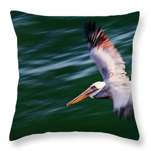 Pelican Throw Pillow featuring the photograph Flyby, California Brown Pelican by Zayne Diamond Photographic