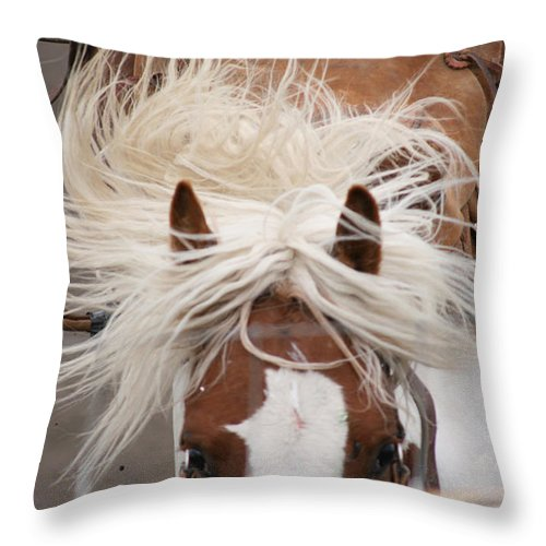 Horse Bronc Rodeo Saddle Rider Close Show Horses Wild Throw Pillow featuring the photograph Flyin Bronc by Andrea Lawrence
