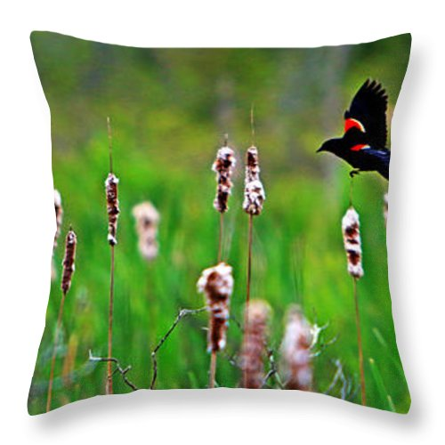 Sun Throw Pillow featuring the photograph Flying Amongst Cattails by James F Towne