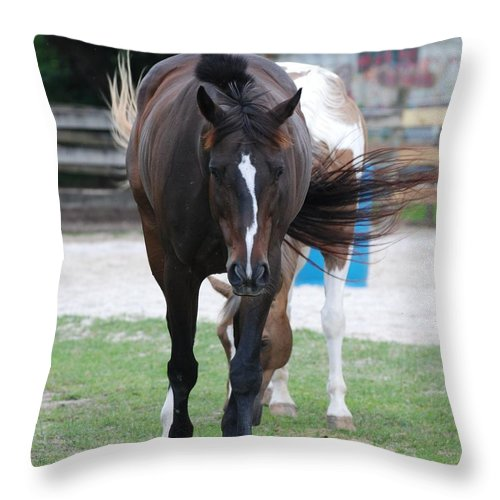 Horses Throw Pillow featuring the photograph Flying Circus by Rob Hans