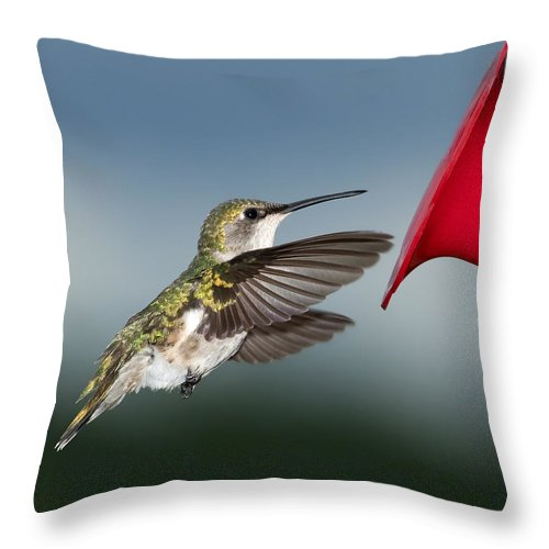 Hummingbird Throw Pillow featuring the photograph Flying Hummingbird Close-up by Al Mueller