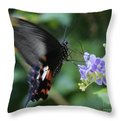 Butterfly Throw Pillow featuring the photograph Flying In close up by Shelley Jones