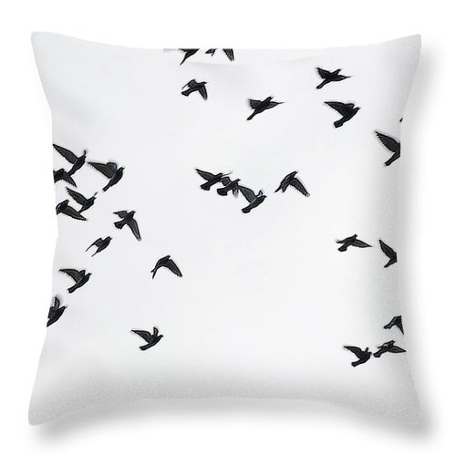 Pigeons Throw Pillow featuring the photograph Flying Pigeons by Elvira Ladocki