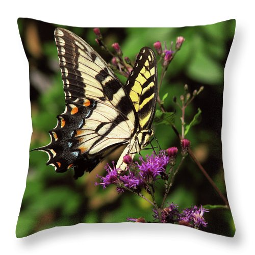 Nature Throw Pillow featuring the photograph Flying Tiger by Peg Urban