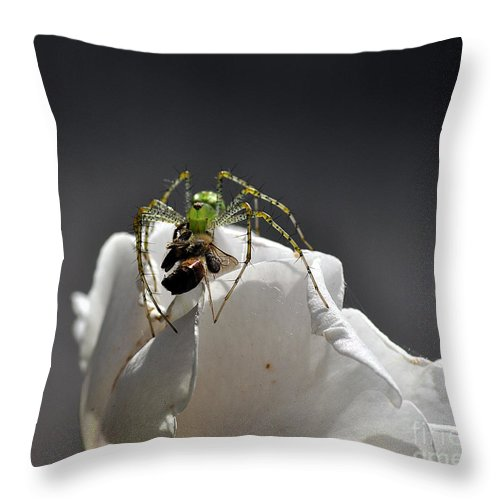 Clay Throw Pillow featuring the photograph Flys At The Picnic by Clayton Bruster