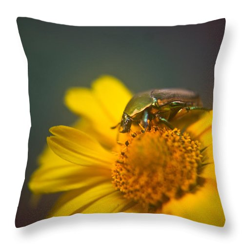 Coleoptera Throw Pillow featuring the photograph Focused June Beetle by Douglas Barnett