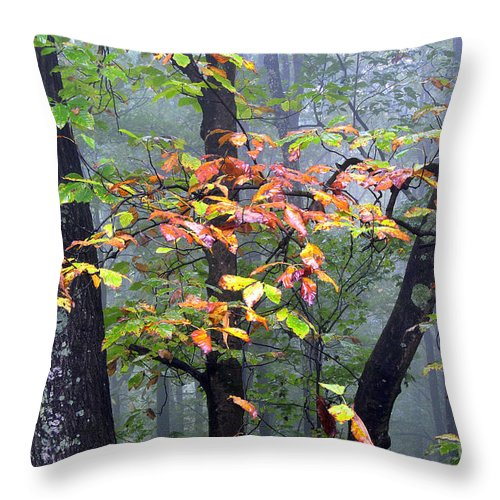 Foggy Throw Pillow featuring the photograph Foggy Fall Forest by Thomas R Fletcher