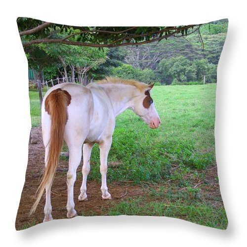 White Horse Throw Pillow featuring the photograph Follow Me by Mary Deal