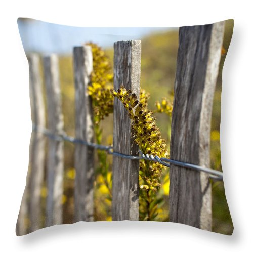 Wildflowers Throw Pillow featuring the photograph Folly Beach Wild Flowers by Dustin K Ryan