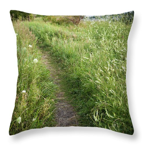 Footpath Throw Pillow featuring the photograph Footpath Along Cliffs by Elena Elisseeva