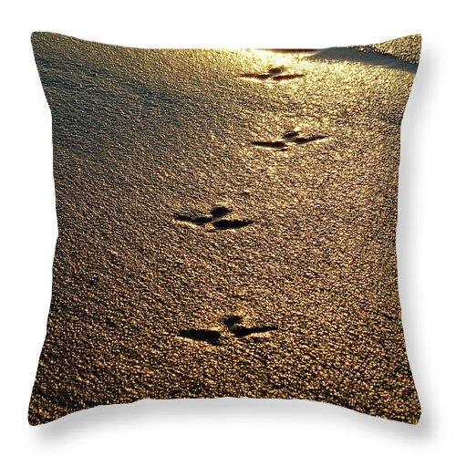 Sand Throw Pillow featuring the photograph Footprints - Bird by Jill Reger