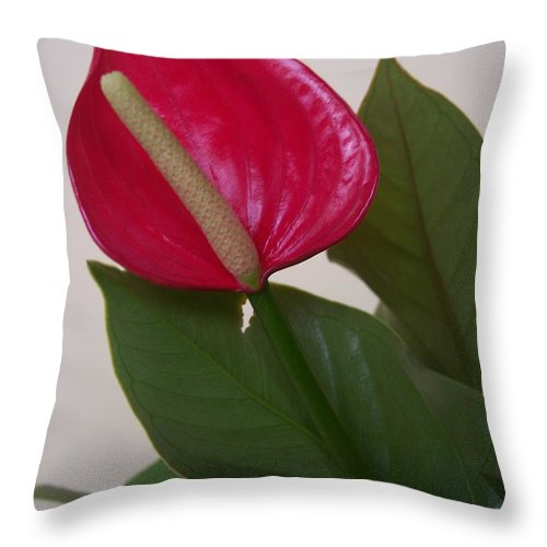 Red Lily Flower Close Up Abstract Throw Pillow featuring the photograph For Danielle II by Anna Villarreal Garbis
