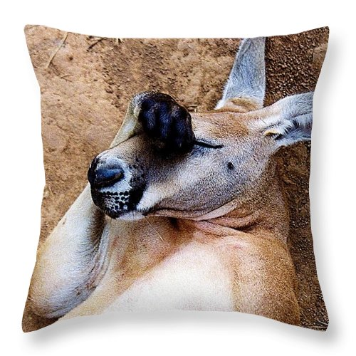 Animals Throw Pillow featuring the photograph For Goodness Sakes by Jan Amiss Photography