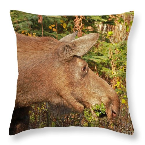 Moose Throw Pillow featuring the photograph Forager by Rick Monyahan