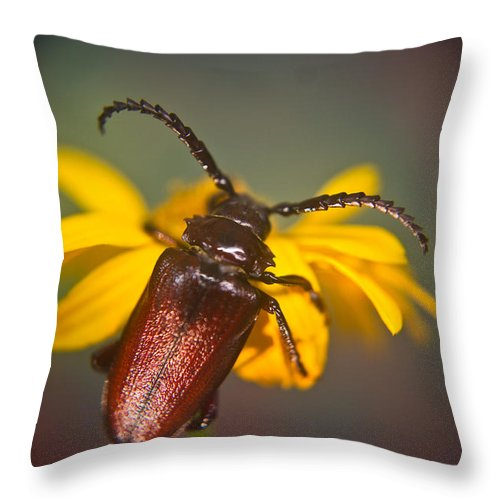 Coleoptera Throw Pillow featuring the photograph Forest Beetle by Douglas Barnett