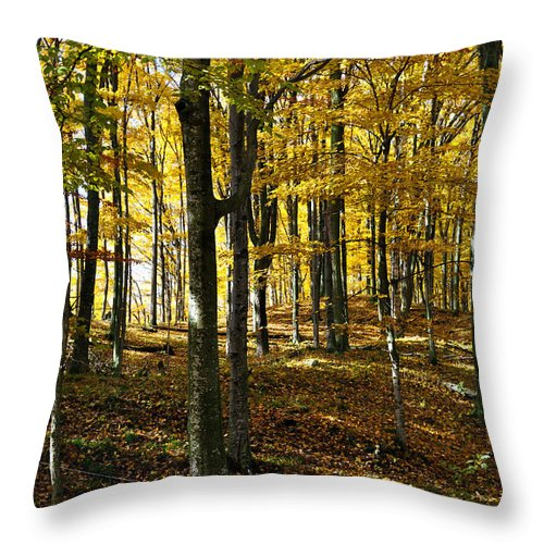 Trees Throw Pillow featuring the photograph Forest Floor One by Tim Nyberg