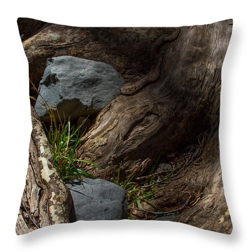 Forest Friends Throw Pillow featuring the photograph Forest Friends by Bonnie Follett